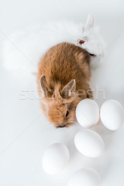 Primer plano vista adorable peludo conejos pollo Foto stock © LightFieldStudios