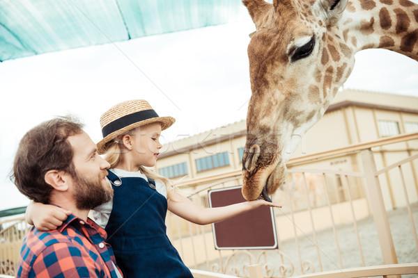 Aile zürafa hayvanat bahçesi yandan görünüş baba Stok fotoğraf © LightFieldStudios