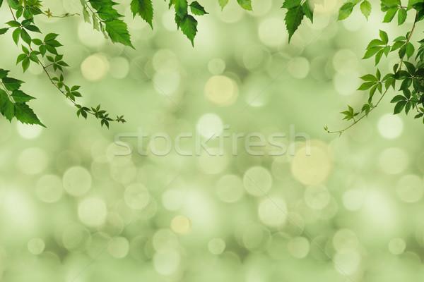 Verde follaje bokeh fotograma completo borroso Foto stock © LightFieldStudios