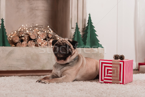 pug with christmas gift Stock photo © LightFieldStudios
