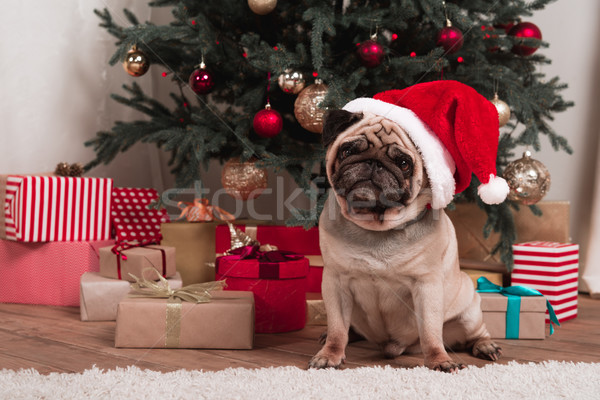 christmas pug Stock photo © LightFieldStudios