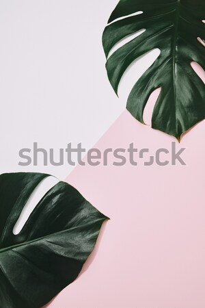 toned view of ficus plants Stock photo © LightFieldStudios