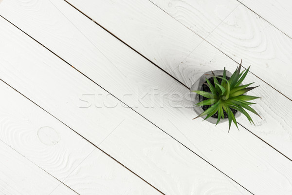 Top view of green potted plant on white wooden background Stock photo © LightFieldStudios