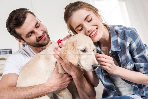 Stok fotoğraf: Köpek · yavrusu · genç · mutlu · çift