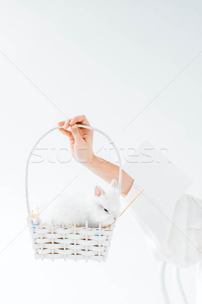 close-up partial view of girl holding basket with cute furry rabbit and blank card isolated on white Stock photo © LightFieldStudios