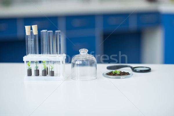 Test tubes with green plants in soil on table in laboratory Stock photo © LightFieldStudios
