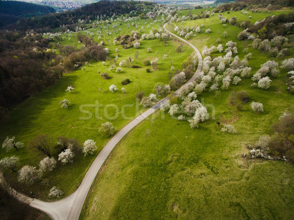 Aerial view of green hills with trees and road, Germany Stock photo © LightFieldStudios
