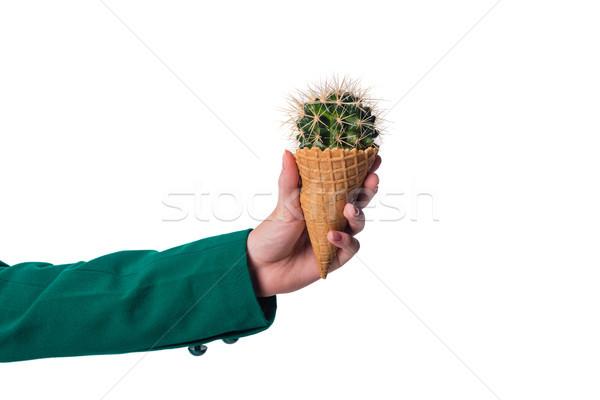 Cactus gofre cono vista nina Foto stock © LightFieldStudios
