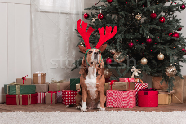 beagle with toy antlers and christmas gifts Stock photo © LightFieldStudios