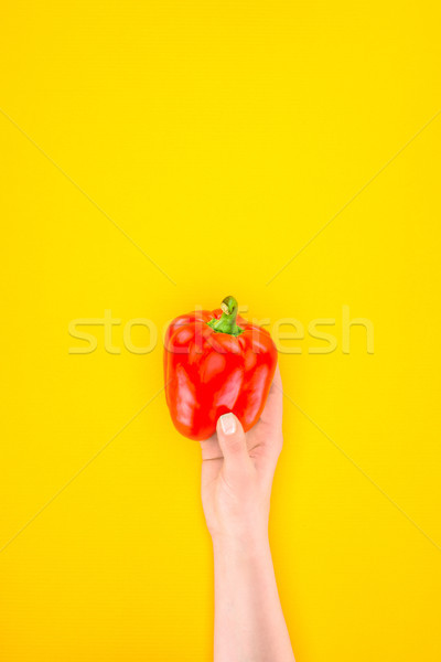 cropped shot of person holding fresh raw paprika pepper isolated on yellow Stock photo © LightFieldStudios