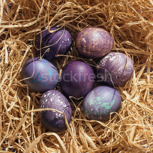 Top view viola easter eggs paglia nido Foto d'archivio © LightFieldStudios