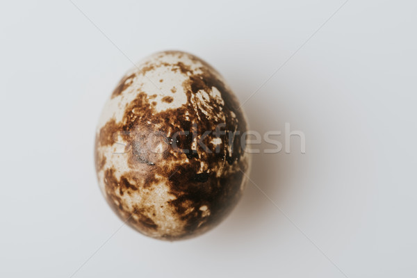 quail egg laying on white background Stock photo © LightFieldStudios