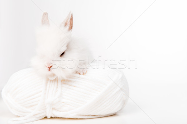 close-up view of adorable furry rabbit and ball of yarn isolated on white  Stock photo © LightFieldStudios