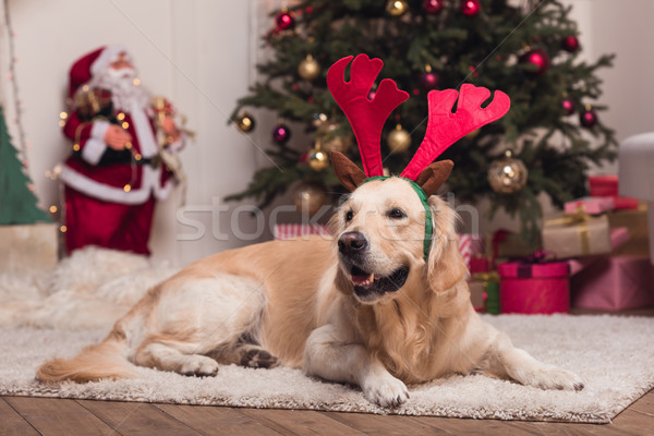 golden retriever dog in antlers Stock photo © LightFieldStudios
