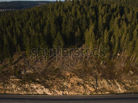 Aerial view of magnificent landscape with forest and road, Germany Stock photo © LightFieldStudios