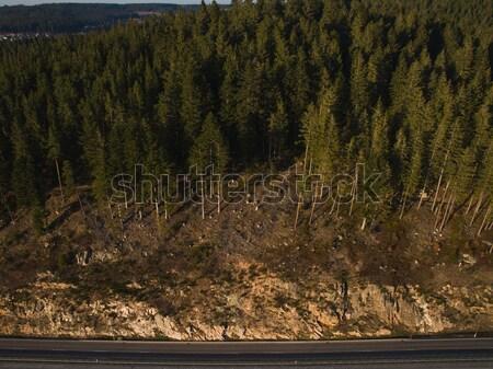 великолепный пейзаж лес дороги Германия Сток-фото © LightFieldStudios