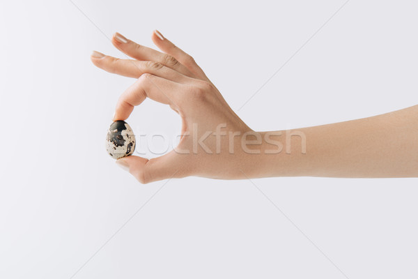 cropped image of hand holding quail egg on white background Stock photo © LightFieldStudios