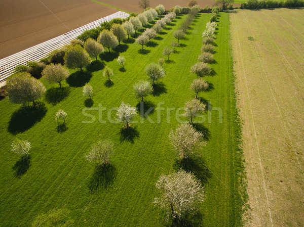 Aerial view of magnificent landscape with fruit trees in garden, Germany Stock photo © LightFieldStudios