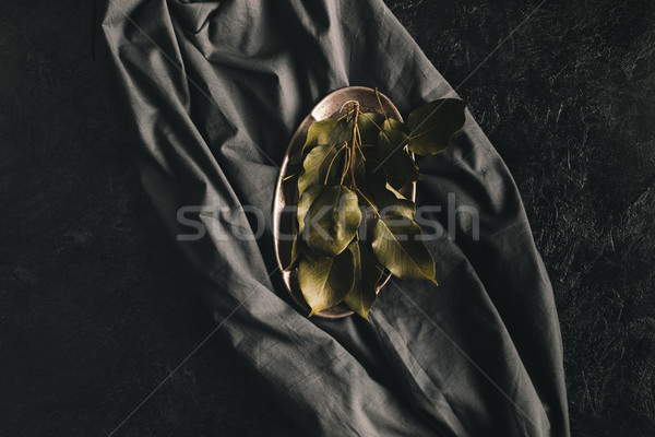 apple tree leaves Stock photo © LightFieldStudios