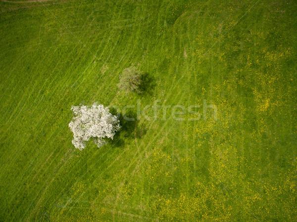 Top мнение зеленый области деревья Германия Сток-фото © LightFieldStudios