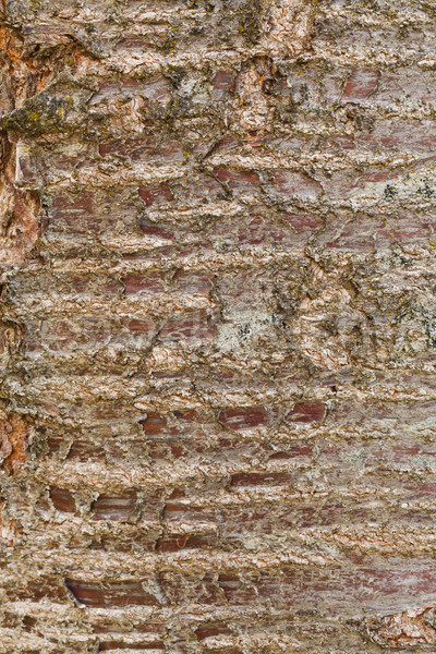 árbol corteza marrón wallpaper textura patrón Foto stock © Lighthunter