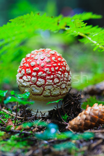 Hidden Beauties Deep in the Forests Stock photo © Lighthunter