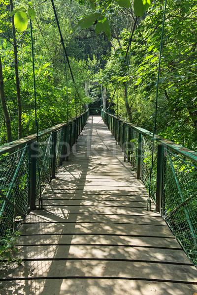 Bridge into the green Stock photo © lightkeeper