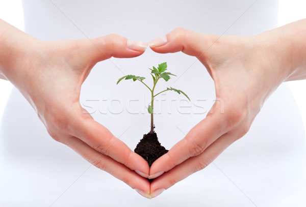 Environmental awareness and protection concept Stock photo © lightkeeper