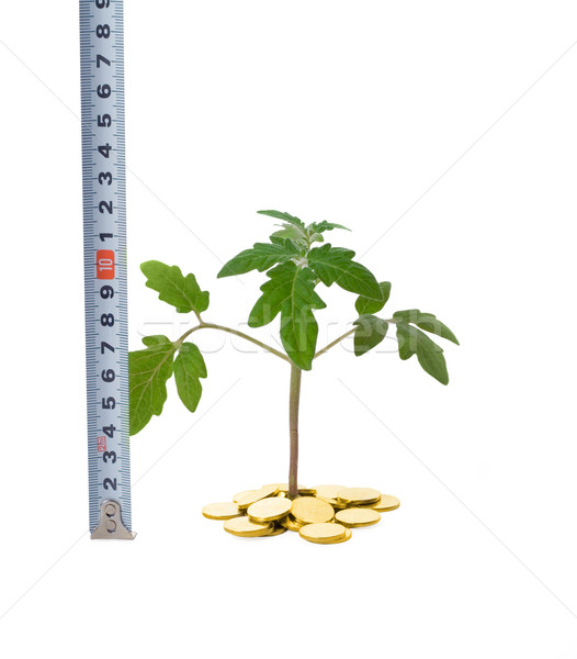 Measuring business growth Stock photo © lightkeeper