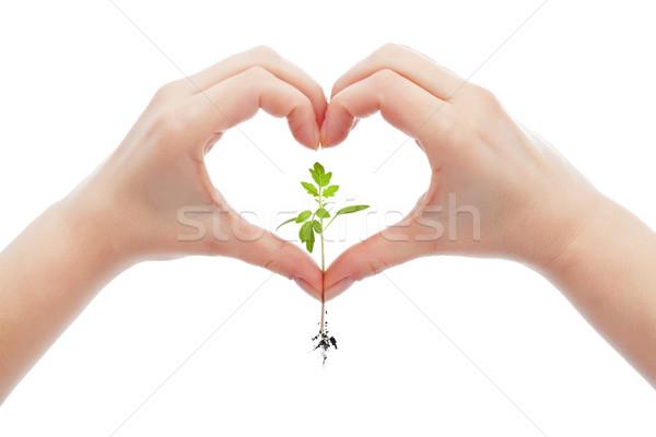 Сток-фото: любви · природы · жизни · женщину · стороны