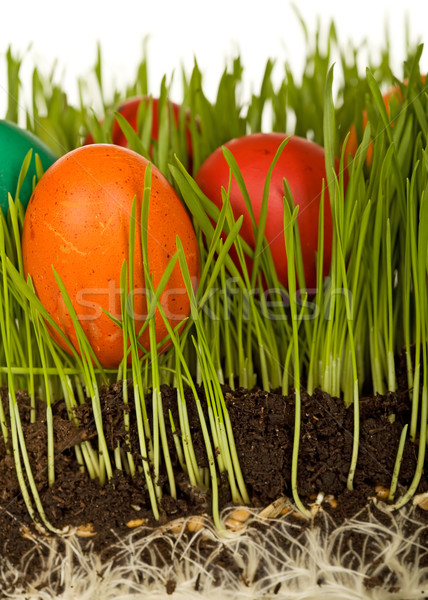 The science of easter eggs in the grass Stock photo © lightkeeper