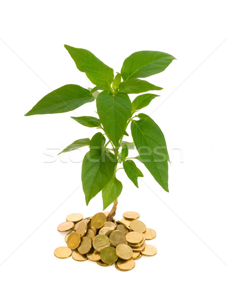 Conceptual profit Stock photo © lightkeeper