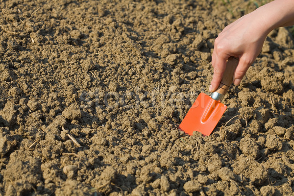 Woman preparing soil for spring gardening Stock photo © lightkeeper