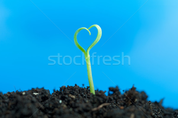 Close-up on young seedling growing out of soil Stock photo © lightkeeper