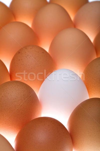 White egg between brown ones Stock photo © lightkeeper