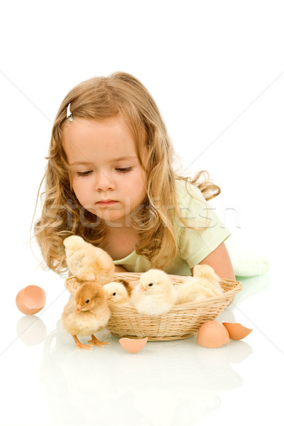 Little girl with small fluffy chickens Stock photo © lightkeeper