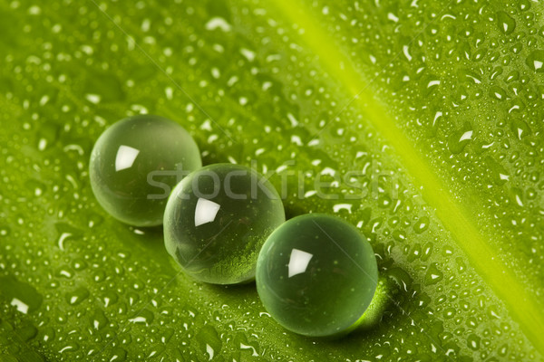 Marbles on wet leaf Stock photo © lightkeeper