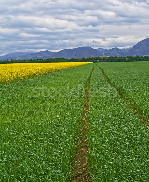 Rural landscape Stock photo © lightkeeper