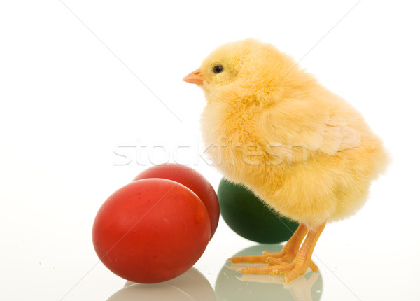 Little easter chicken with dyed eggs Stock photo © lightkeeper