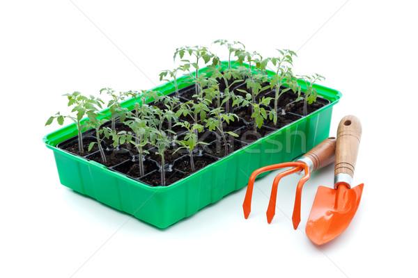 Seedlings and gardening utensils Stock photo © lightkeeper