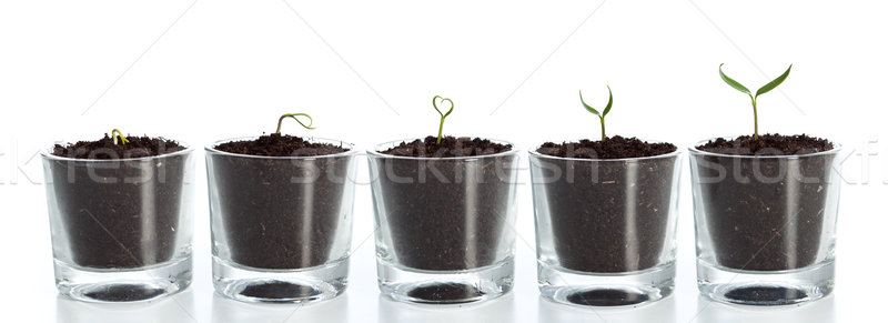 Plant evolution Stock photo © lightkeeper