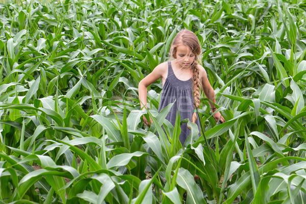 Farmer girl inspecting the growing corn Stock photo © lightkeeper