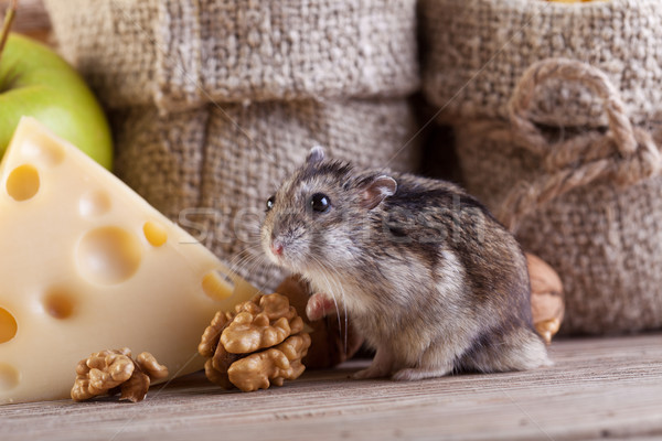 Rodent heaven - hamster or mouse in the pantry Stock photo © lightkeeper