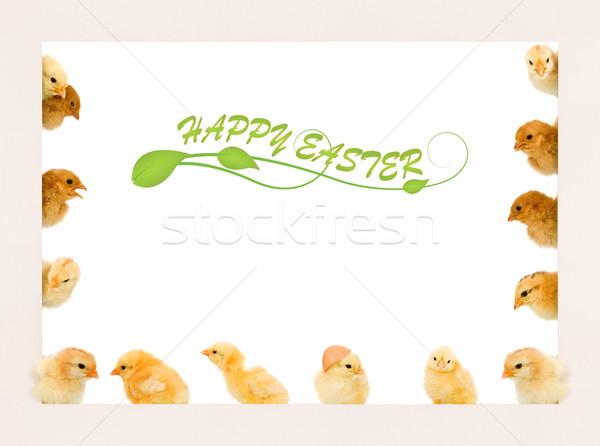 Stok fotoğraf: Bebek · tavuk · çerçeve · farklı · pozisyonları · Paskalya