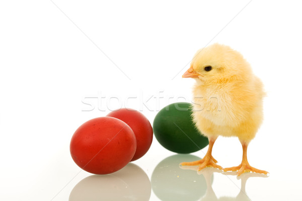 Little fluffy Eastern chicken with dyed eggs Stock photo © lightkeeper