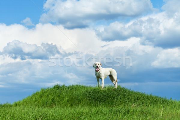 Hond permanente heuvel bewolkt hemel groot Stockfoto © lightkeeper
