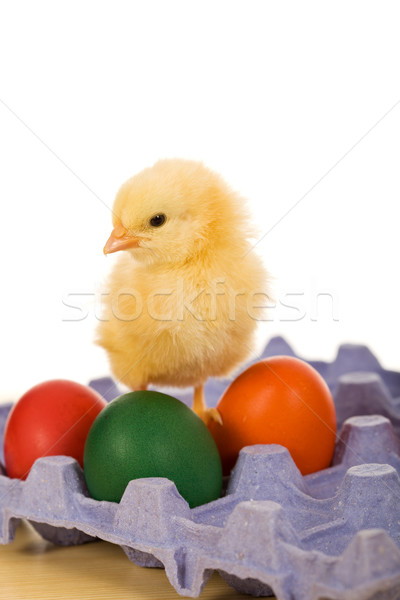 Baby eastern chicken with eggs on blue carton Stock photo © lightkeeper