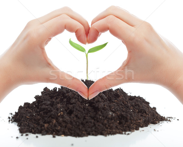 Love for nature concept Stock photo © lightkeeper
