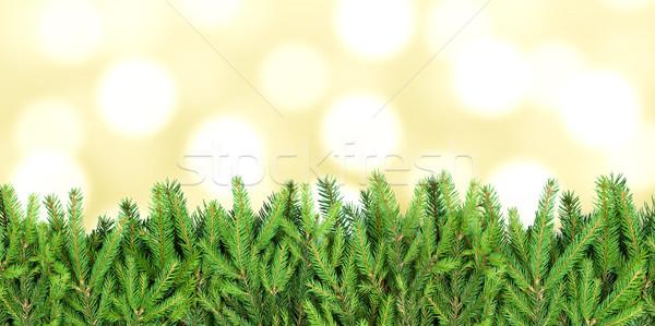 Raya abeto Navidad Foto stock © lightkeeper