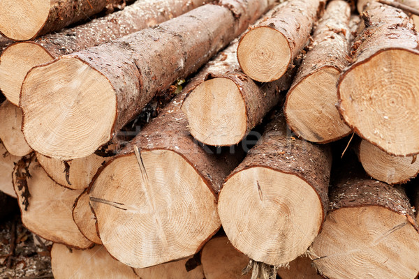 Pine logs Stock photo © lightkeeper